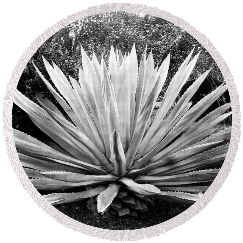 Agave Round Beach Towel featuring the photograph The Great Agave by David Lee Thompson