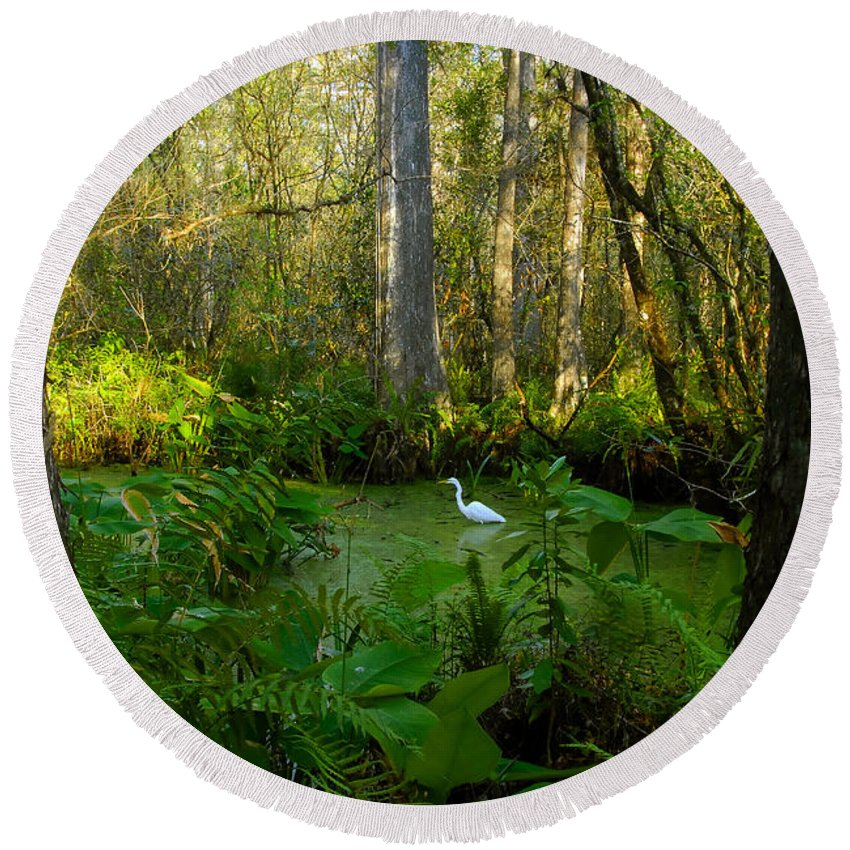 Corkscrew Swamp Round Beach Towel featuring the photograph The Great Corkscrew Swamp by David Lee Thompson