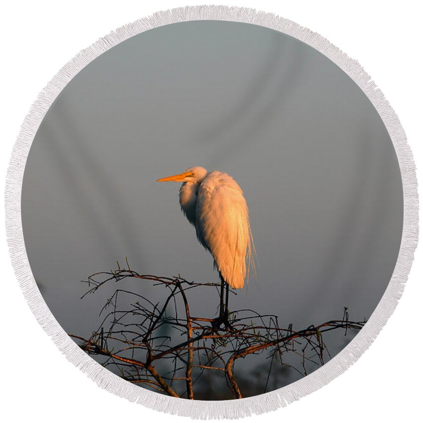Egret Round Beach Towel featuring the photograph The Great Egret by David Lee Thompson