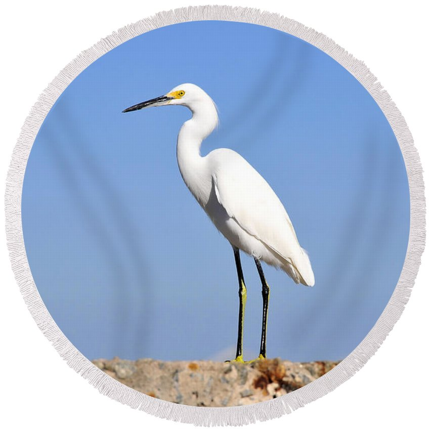 Great Snowy Egret Round Beach Towel featuring the photograph The Great Snowy Egret by David Lee Thompson