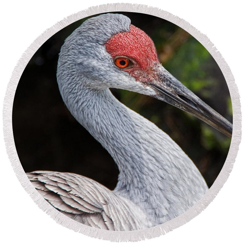 Bird Round Beach Towel featuring the photograph The Greater Sandhill Crane by Christopher Holmes