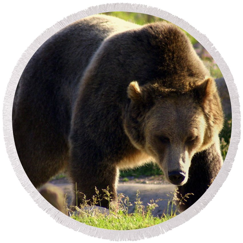 Grizzly Bear Round Beach Towel featuring the photograph The Grizz by Marty Koch