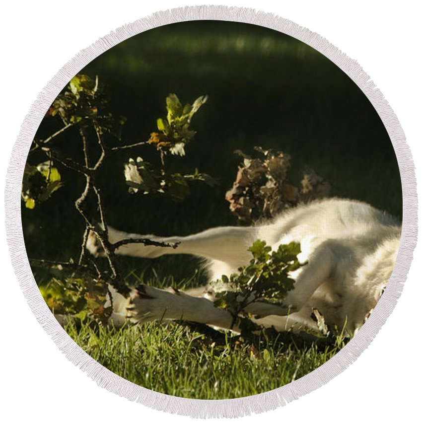 Wolf Round Beach Towel featuring the photograph The Happy Wolf by Angel Ciesniarska