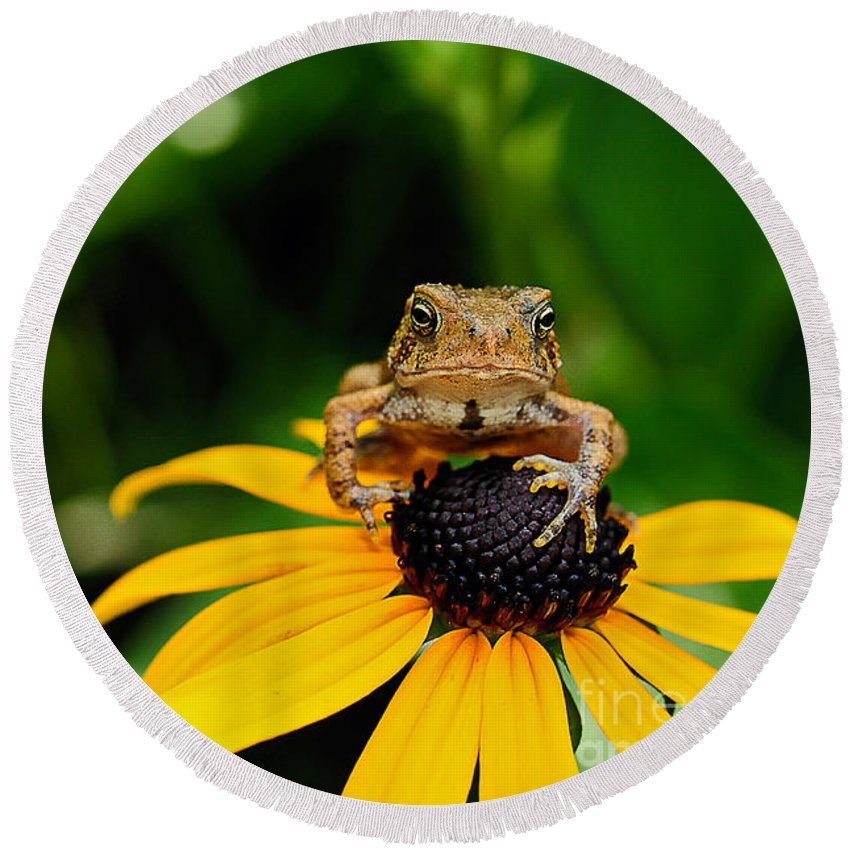 Toad Round Beach Towel featuring the photograph The Harbinger by Lois Bryan