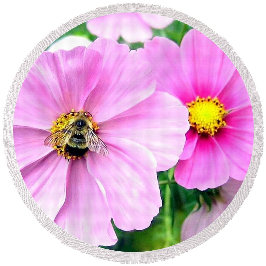 Bee Round Beach Towel featuring the photograph The Honeymaker by Will Borden