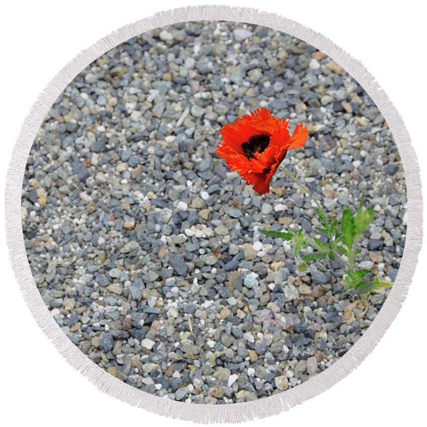 Poppy Round Beach Towel featuring the photograph The Hopeful Poppy by Michael Bessler