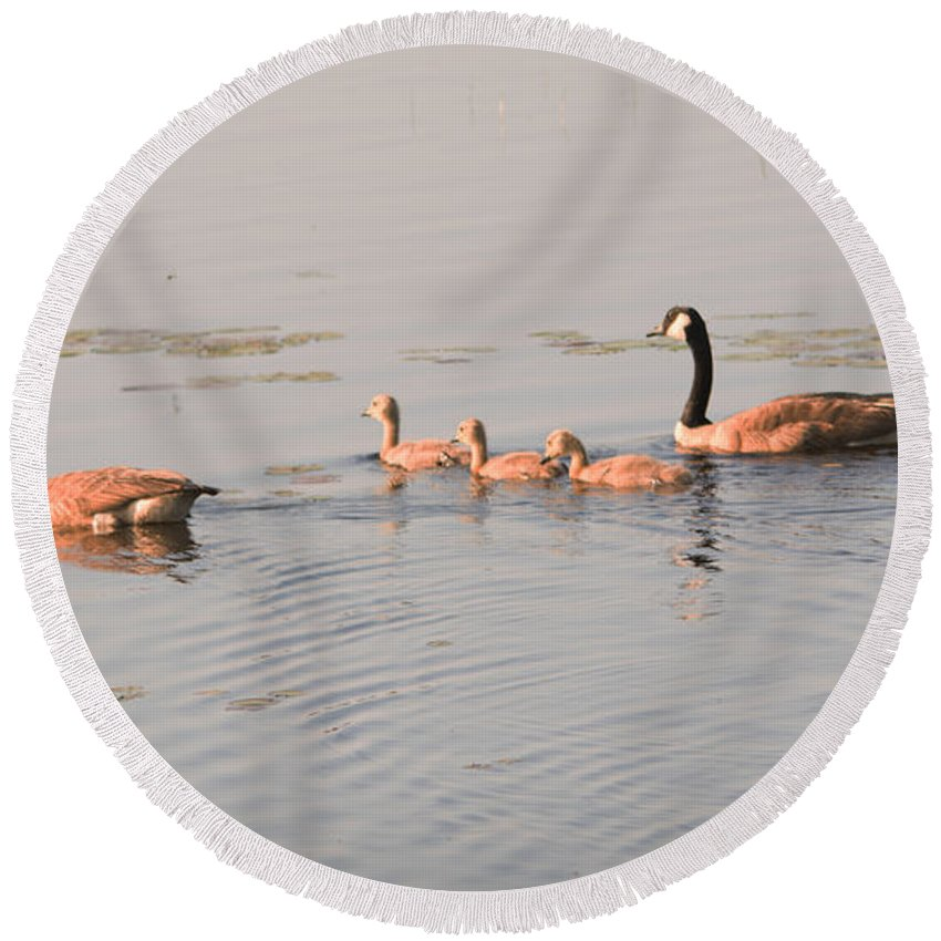 Canadian Geese Round Beach Towel featuring the photograph The Kids Day Out by Linda Kerkau