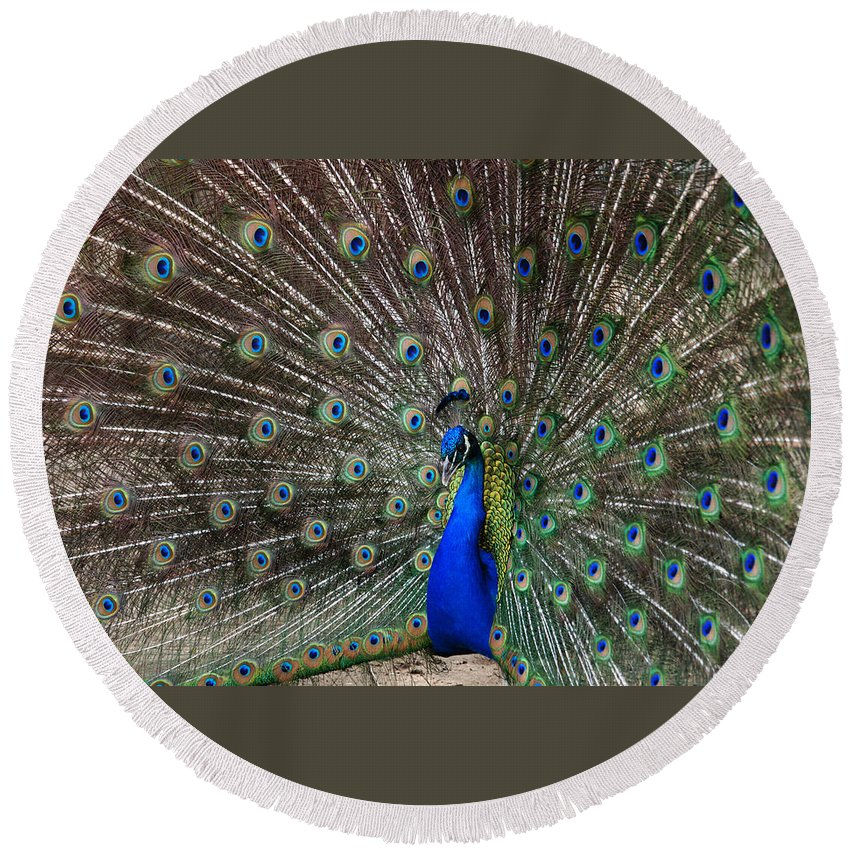 Peacock Round Beach Towel featuring the photograph The King by Susanne Van Hulst