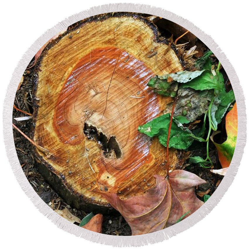 Autumn Round Beach Towel featuring the photograph The Last Of The Old Yew by RC DeWinter