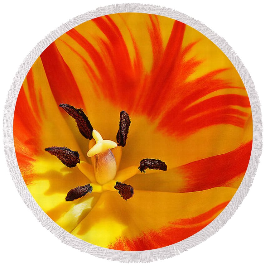 Tulip Round Beach Towel featuring the photograph The Light Inside by Felicia Tica