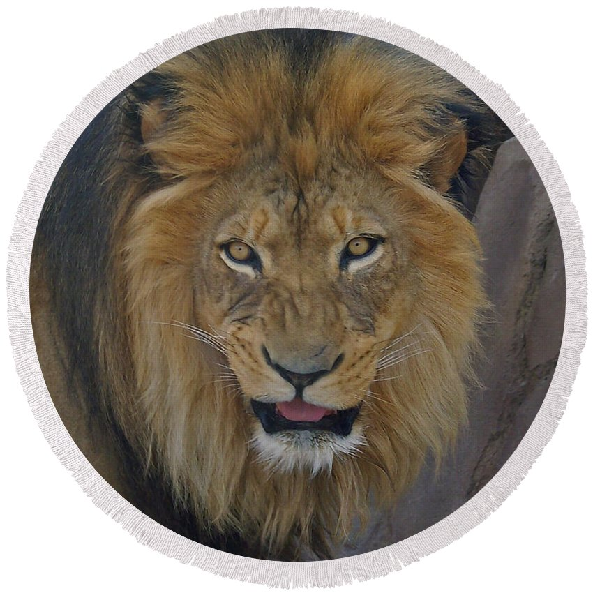 Lion Round Beach Towel featuring the photograph The Lion Dry Brushed by Ernie Echols