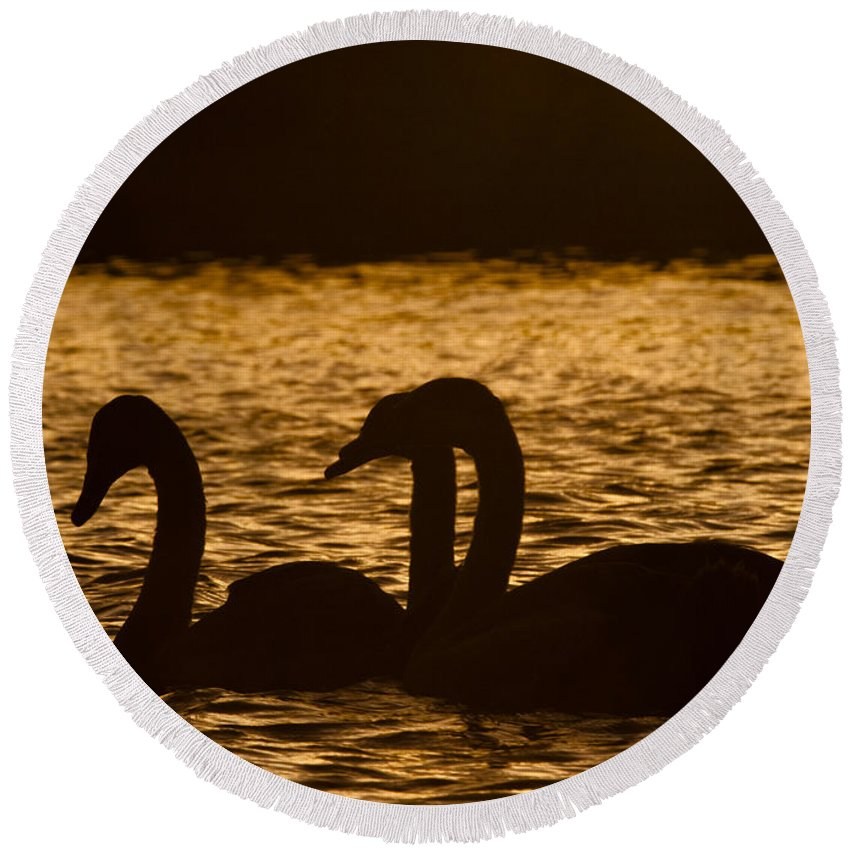 Water Round Beach Towel featuring the photograph The Liquid Gold by Angel Ciesniarska