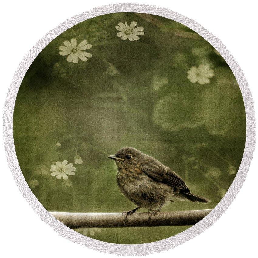 Robin Round Beach Towel featuring the photograph The Little Robin by Angel Ciesniarska