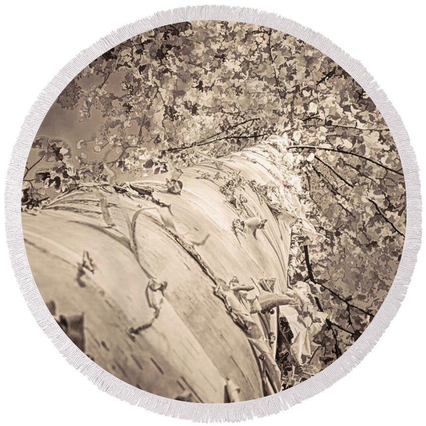Birch Tree Round Beach Towel featuring the photograph The Mighty Birch Tree by LeeAnn McLaneGoetz McLaneGoetzStudioLLCcom