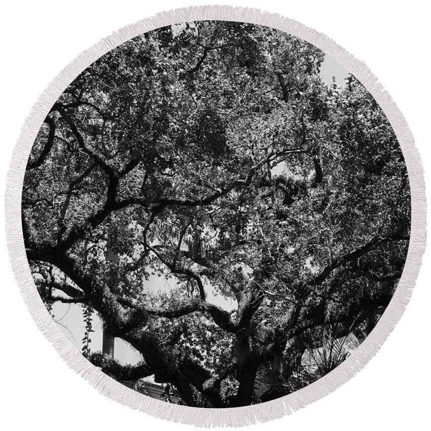 Black And White Round Beach Towel featuring the photograph The Monastery Tree by Rob Hans