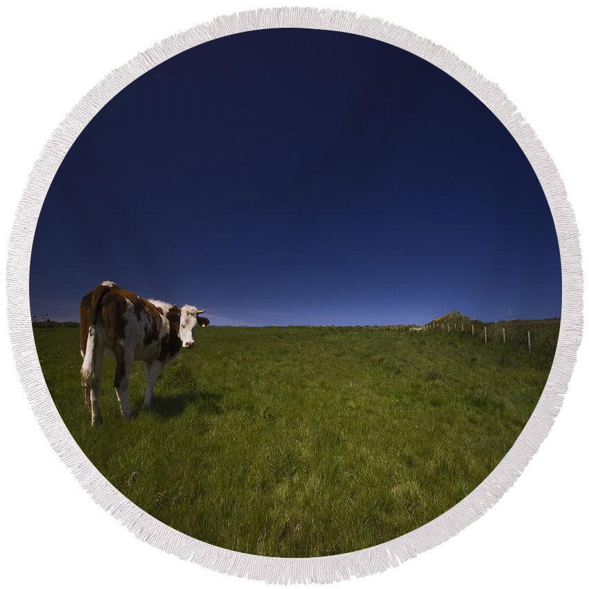 Cow Round Beach Towel featuring the photograph The Moody Cow by Angel Ciesniarska