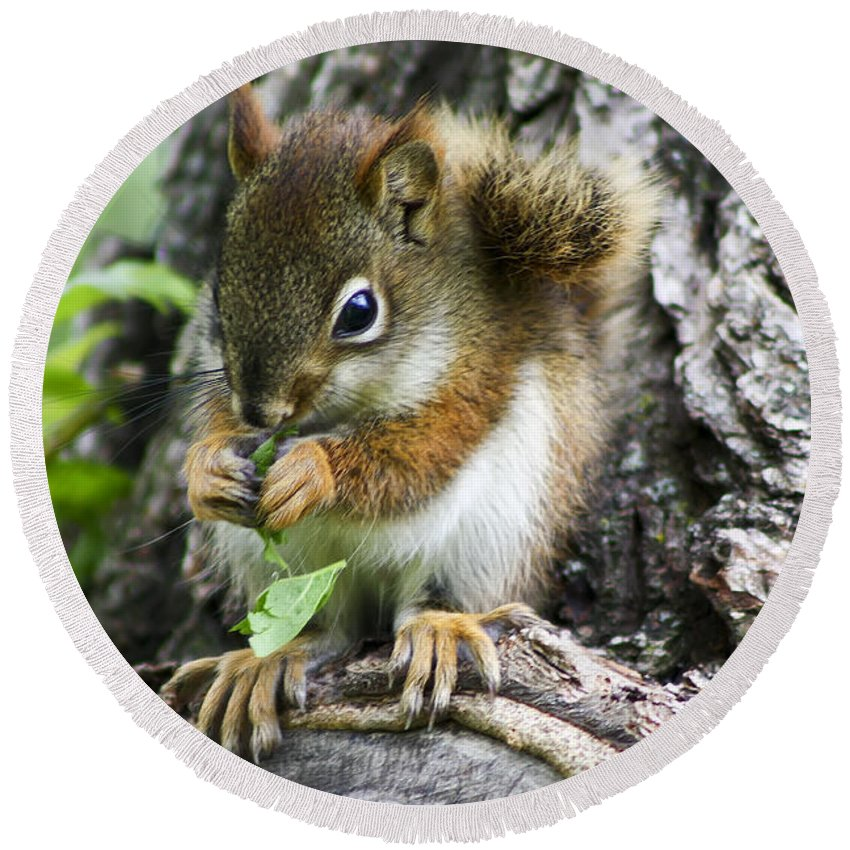 Animal Round Beach Towel featuring the photograph The Most Adorable Baby Squirrel by Teresa Zieba