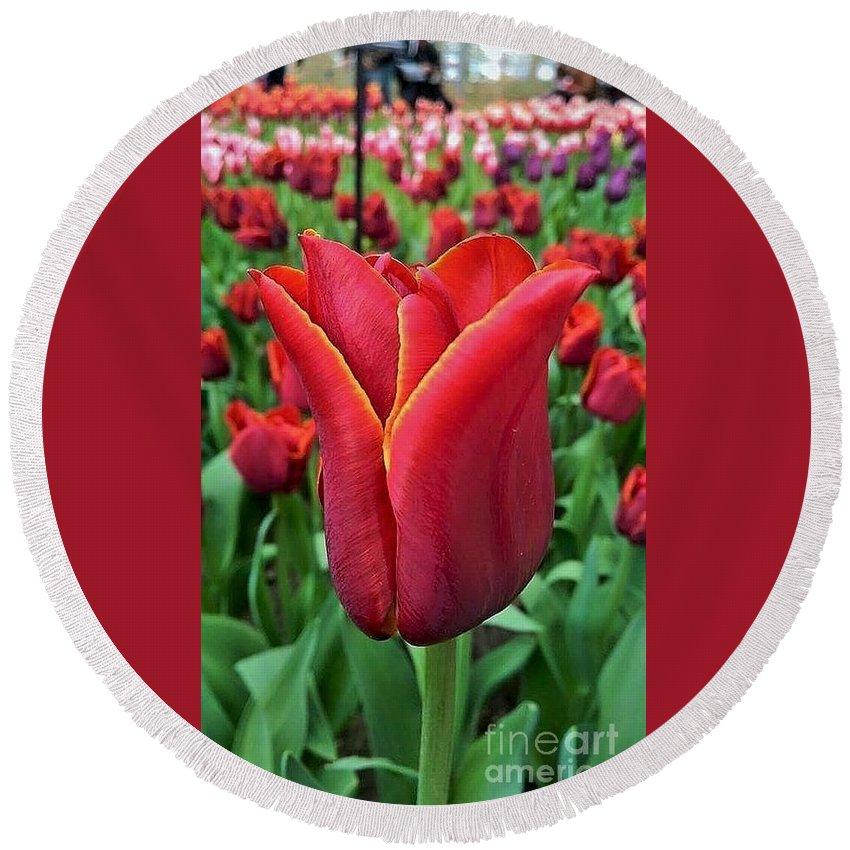 The Nederlands; Tulips; Bulb Flowers; Flowers; Festival' Tulip Festival Round Beach Towel featuring the photograph The Nederlands Tulip Festival 1 by Alicia Ingram