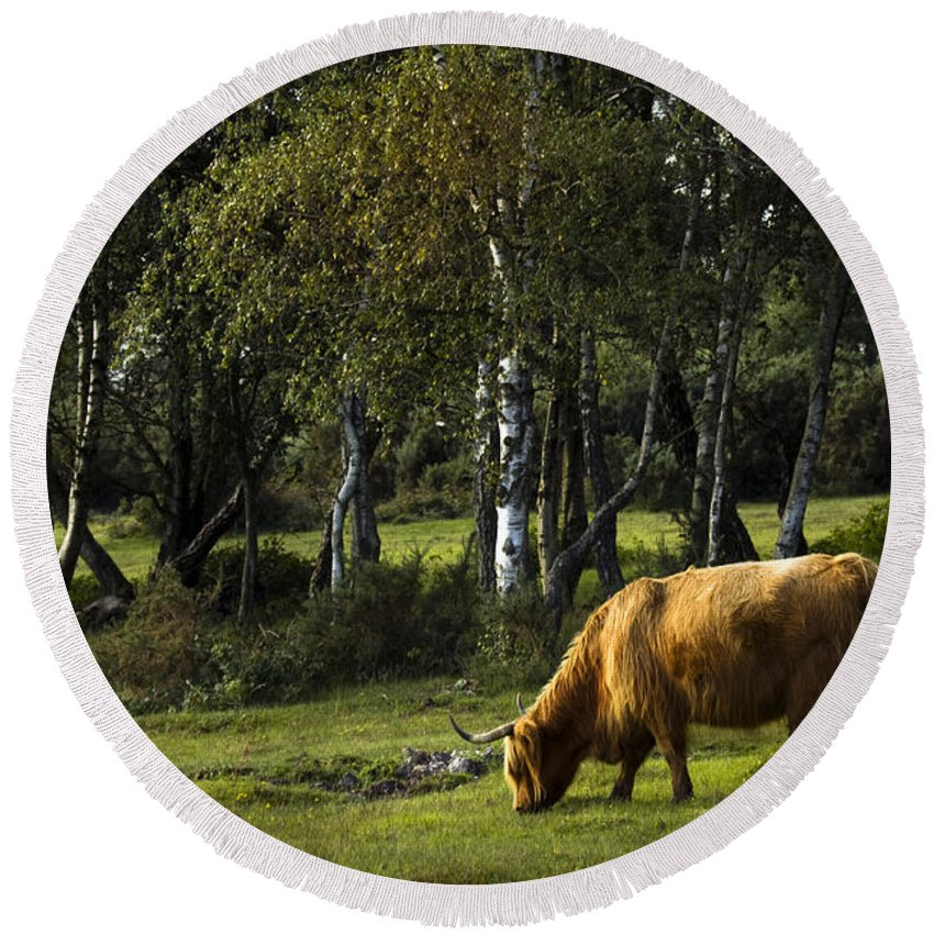 Heilan Coo Round Beach Towel featuring the photograph the New forest creatures by Angel Ciesniarska