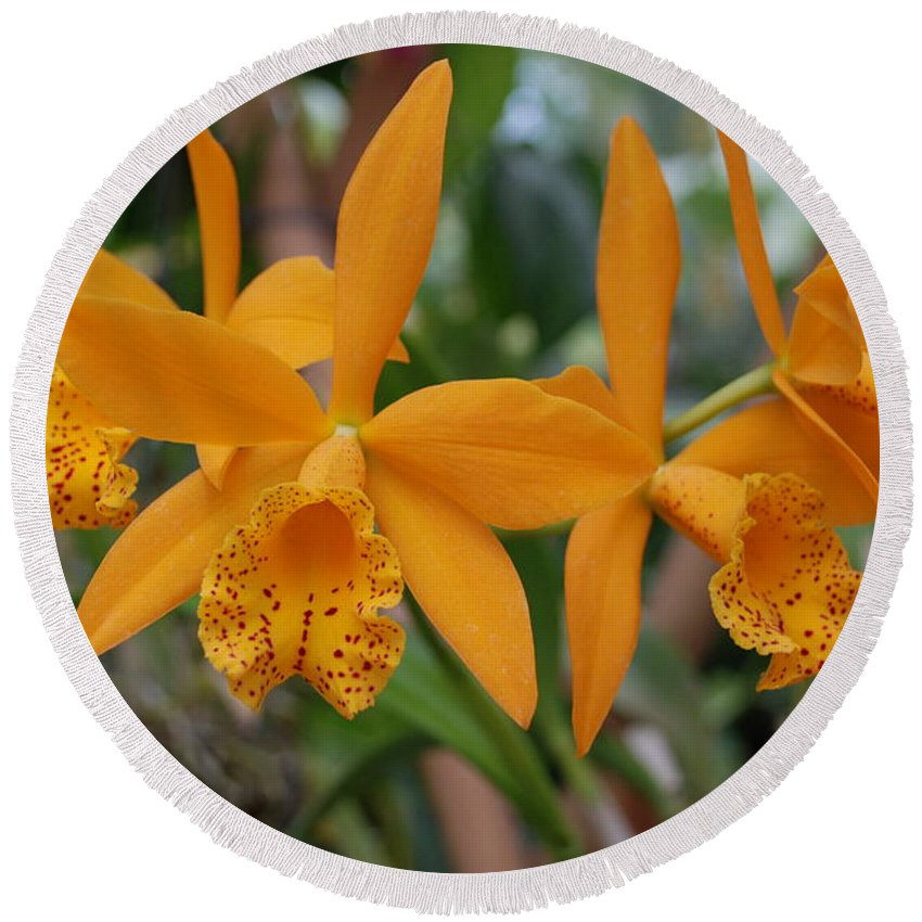 Macro Round Beach Towel featuring the photograph The Orange Orchids by Rob Hans