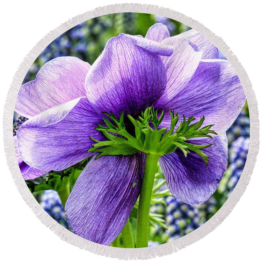 Recent Round Beach Towel featuring the photograph The Other Side Of Anemone  by Geraldine Scull