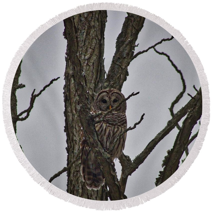 Owl Round Beach Towel featuring the photograph The Owl by Ty Shults