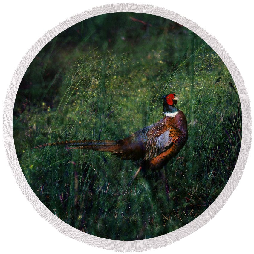 Pheasant Round Beach Towel featuring the photograph The Pheasant In The Autumn Colors by Angel Tarantella