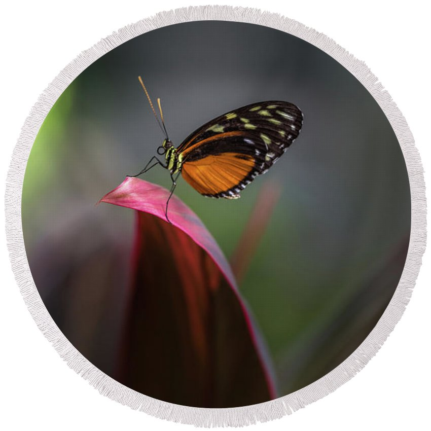 Heliconius Round Beach Towel featuring the photograph The Podium- 2 by Calazone's Flics