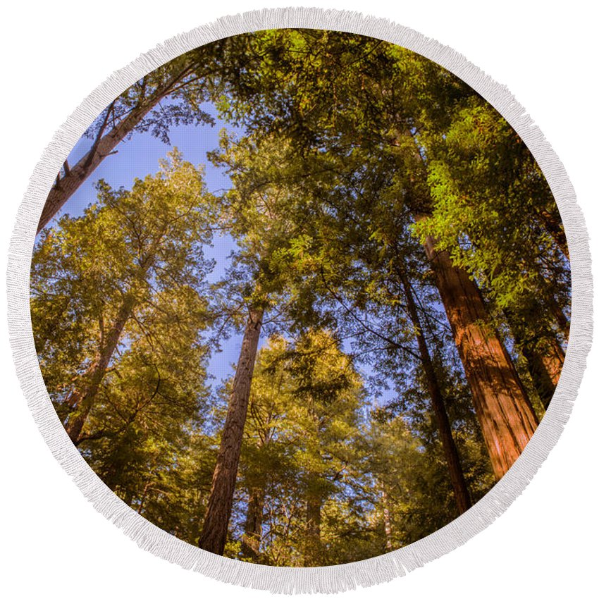 Trees Round Beach Towel featuring the photograph The Portola Redwood Forest by Bryant Coffey