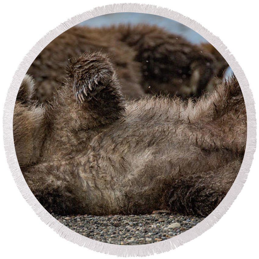 Bear Cub Round Beach Towel featuring the photograph The Pose by Kathy Whitehurst