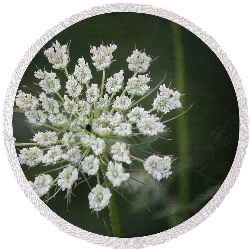 Queen Anne's Lace Round Beach Towel featuring the photograph The Queens Lace by Teresa Mucha