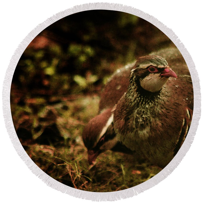 Partridge Round Beach Towel featuring the photograph The Redlegged Partridges by Angel Ciesniarska