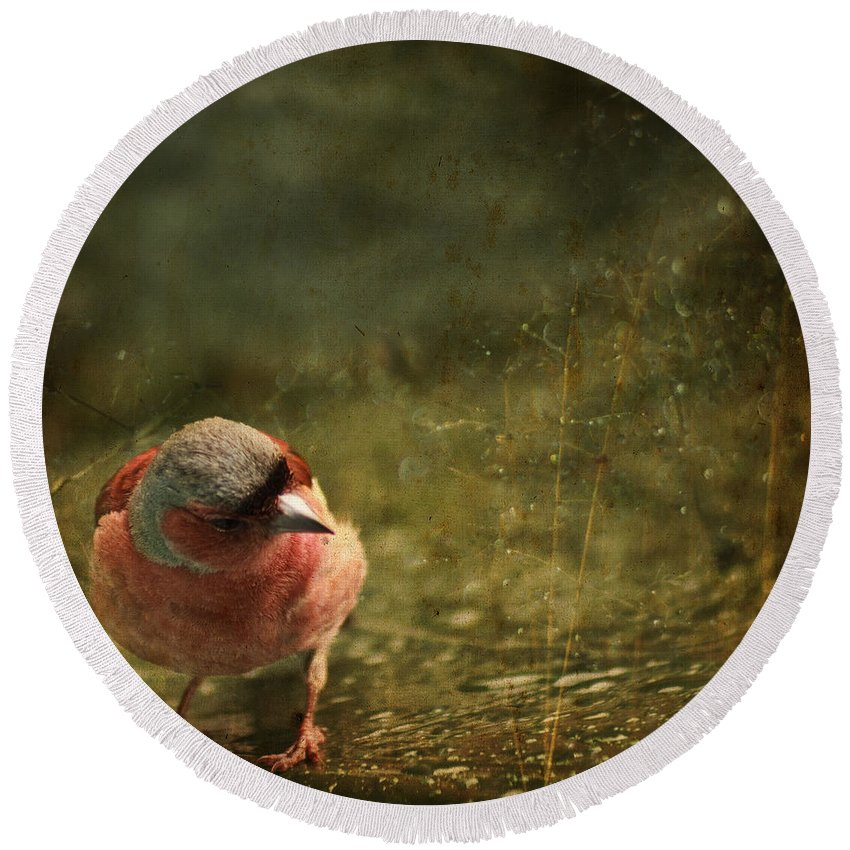 Chaffinch Round Beach Towel featuring the photograph The Sad Chaffinch by Angel Ciesniarska