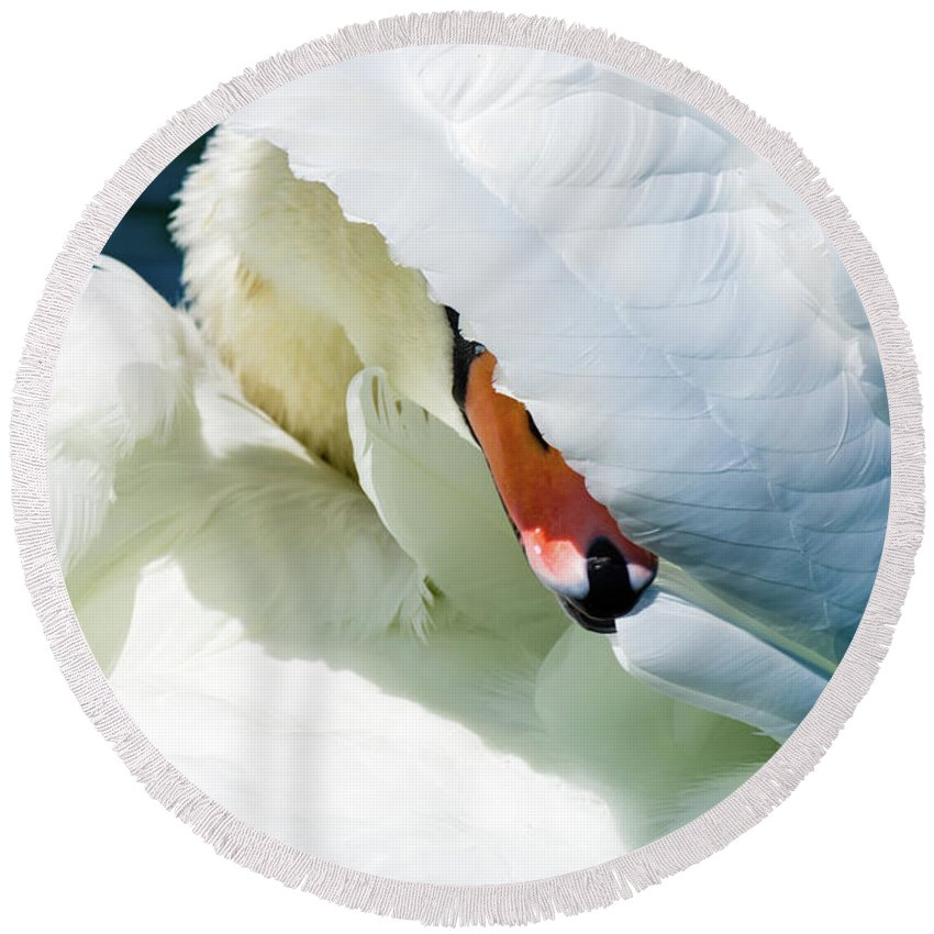 Mute Swan Round Beach Towel featuring the photograph The Seductive Swan by Henry Kim