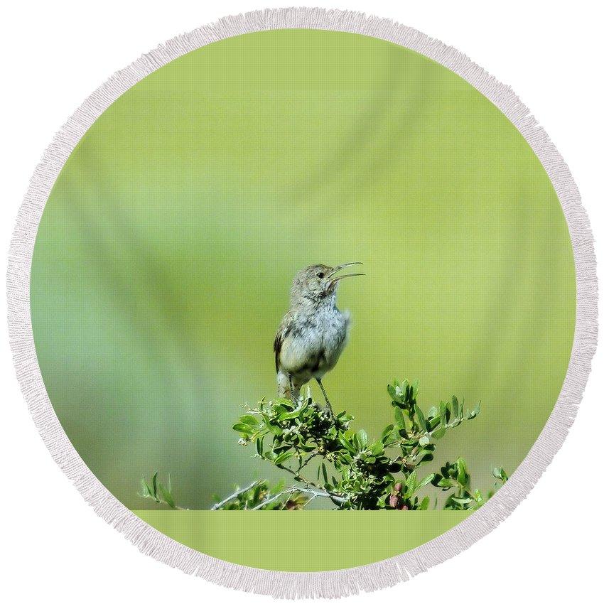 Birds Idaho Birds. Small Birds Round Beach Towel featuring the photograph The Singing Birdie by Jeff Swan