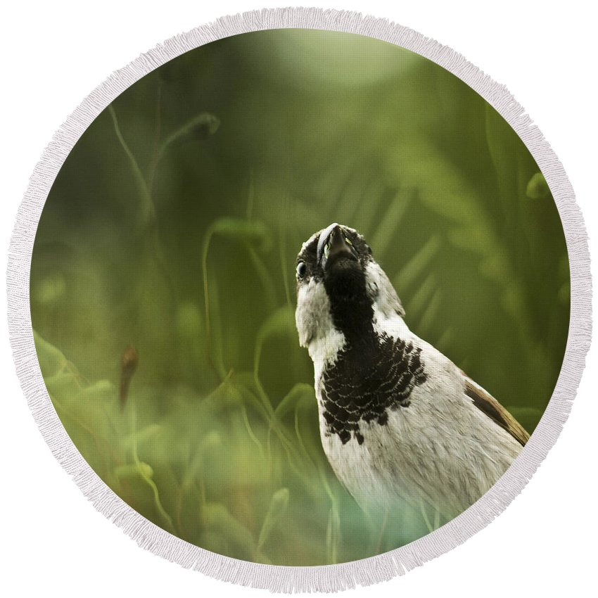 Sparrow Round Beach Towel featuring the photograph The Sparrow by Angel Tarantella