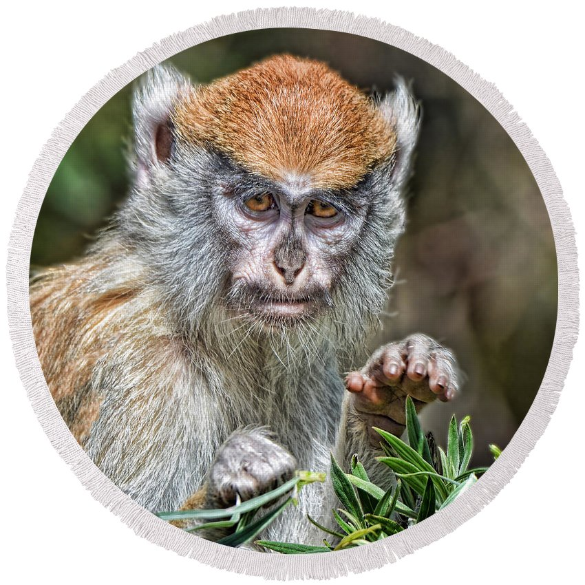 Patas Monkey Round Beach Towel featuring the photograph The Stare A Baby Patas Monkey by Jim Fitzpatrick
