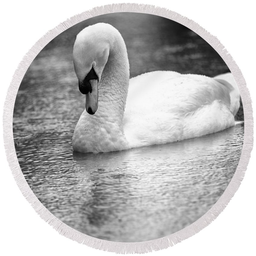 The Swans Solitude Round Beach Towel featuring the photograph The Swans Solitude by David Ortega Baglietto
