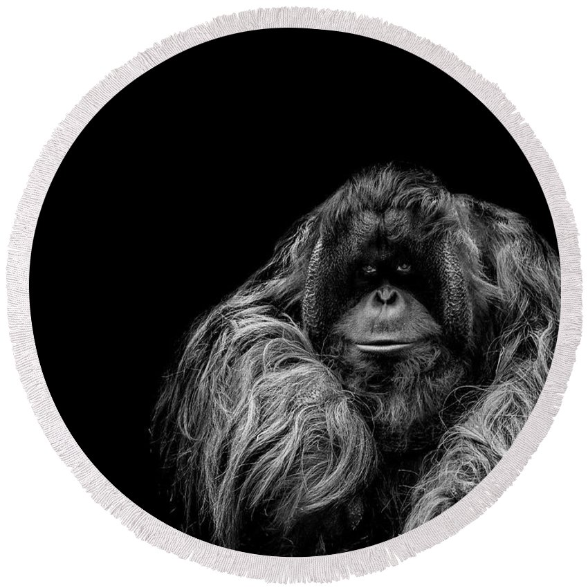 Orangutan Round Beach Towel featuring the photograph The Vigilante by Paul Neville