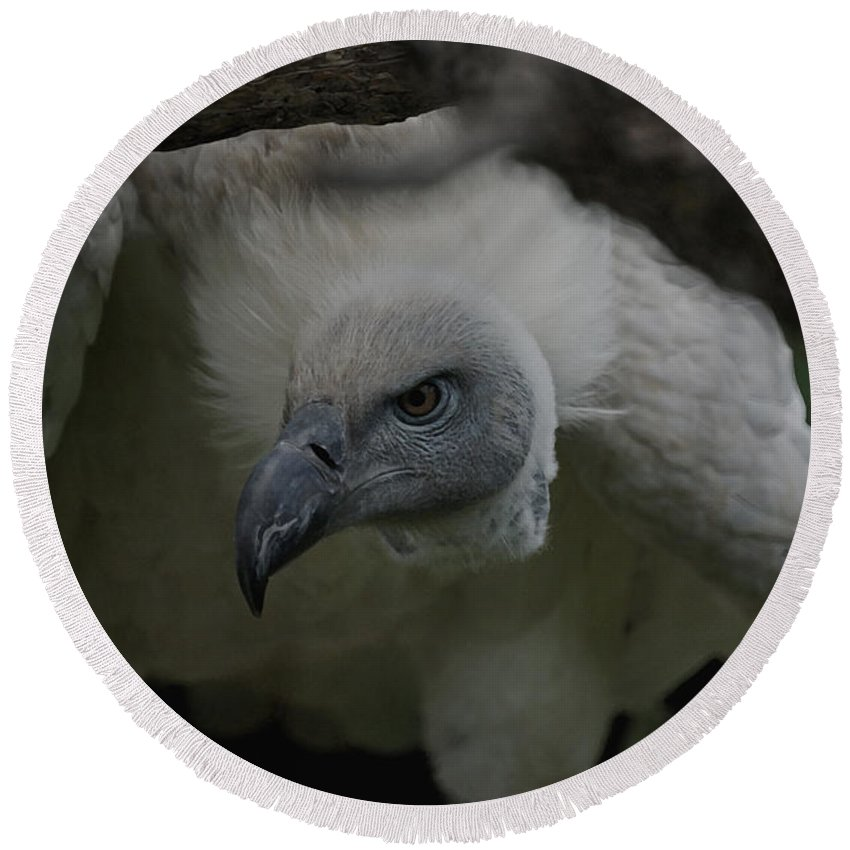 Animals Round Beach Towel featuring the photograph The Vulture Dry Brushed by Ernie Echols