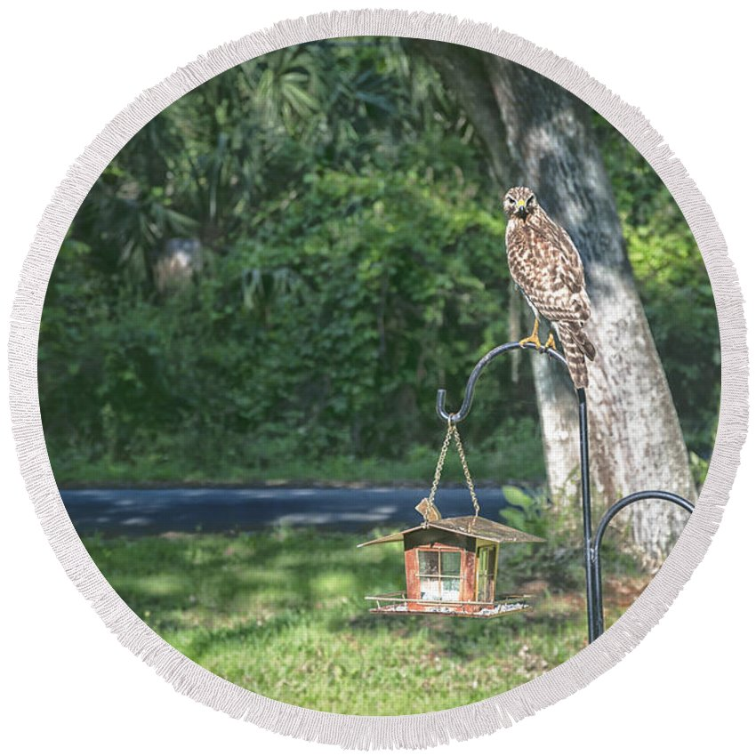 Hawk Round Beach Towel featuring the photograph The Watcher by Louise Hill