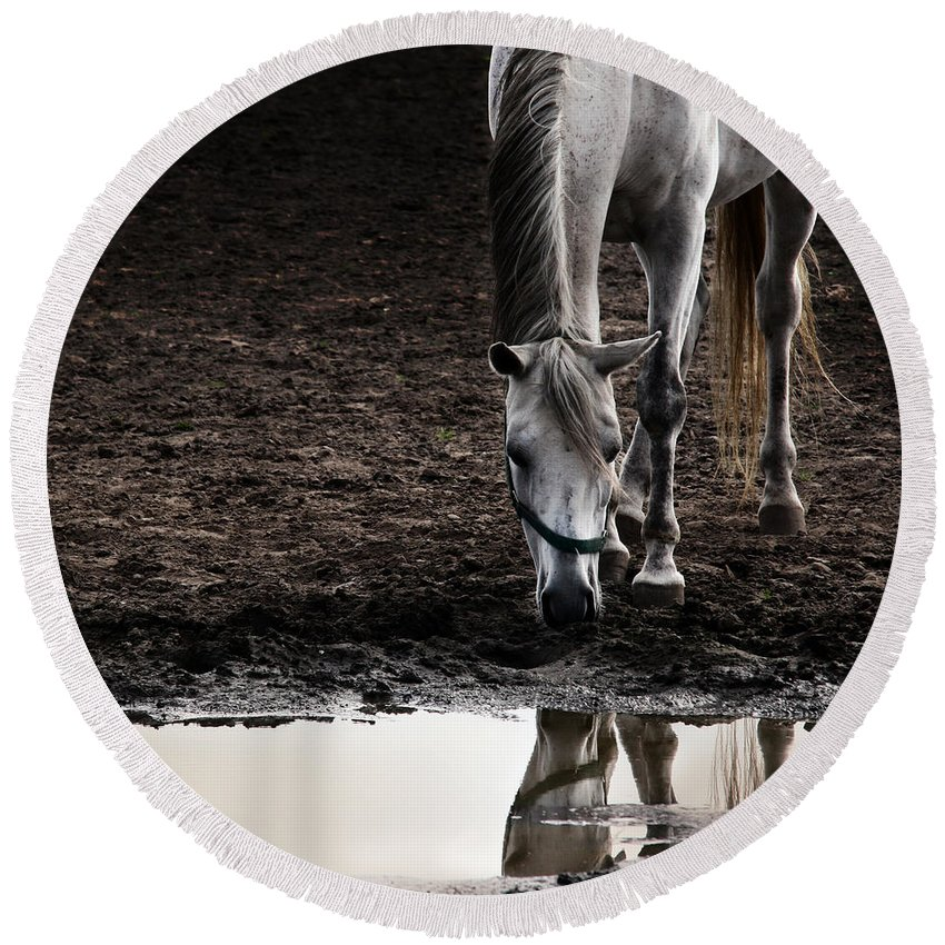 Horse Round Beach Towel featuring the photograph The Water Reflection by Angel Ciesniarska