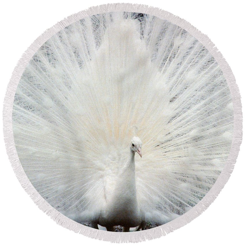 Peacocks Round Beach Towel featuring the photograph The White Peacock by Jeffery L Bowers