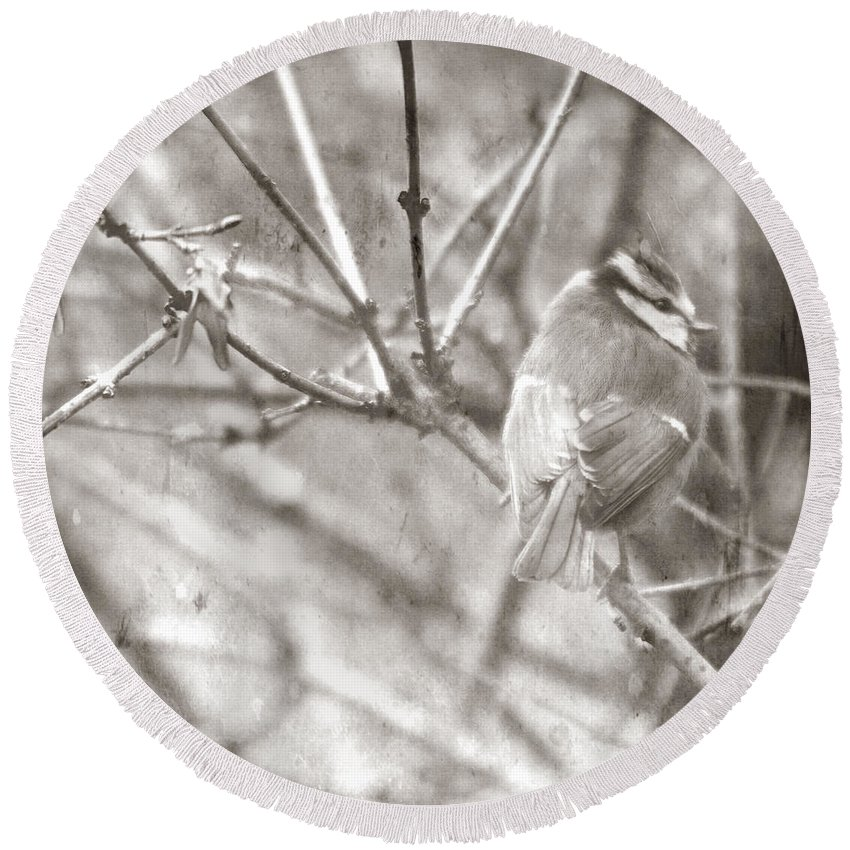 Blue Tit Round Beach Towel featuring the photograph The Winter Time by Angel Ciesniarska