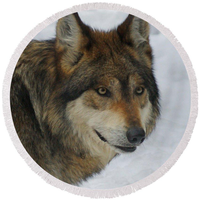 Wolf Round Beach Towel featuring the digital art The Wolf 2 by Ernie Echols