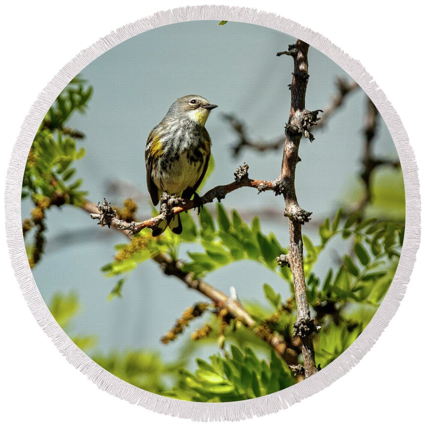 Small Round Beach Towel featuring the photograph The Yellow-rumped Warbler by Robert Bales
