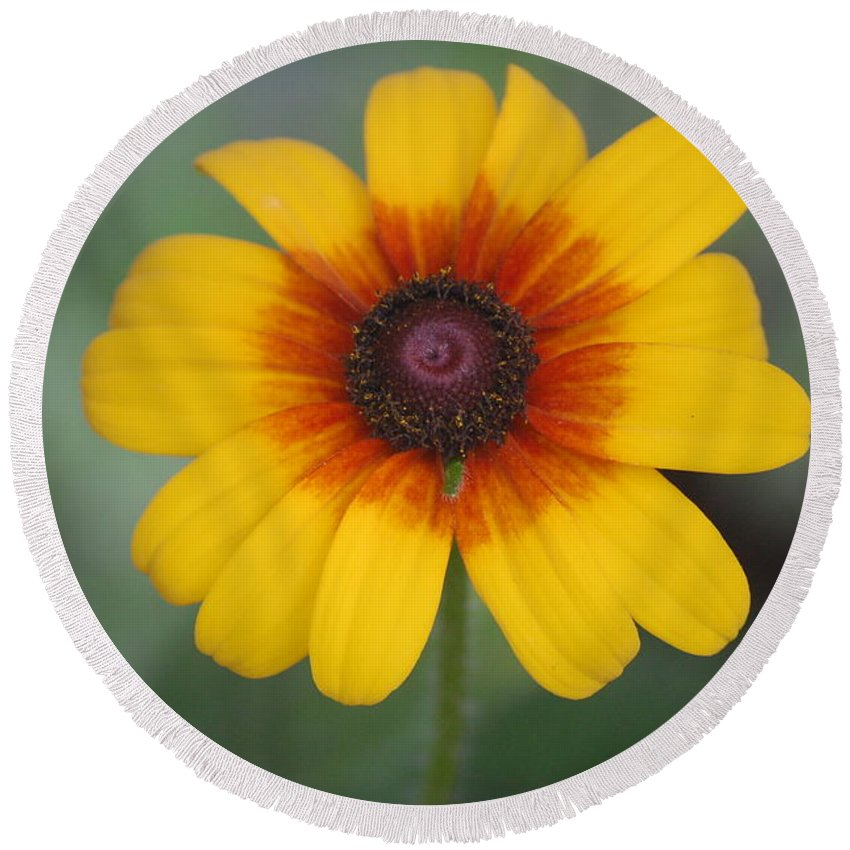 Landscape Round Beach Towel featuring the photograph They Call Me Mellow Yellow. by David Lane