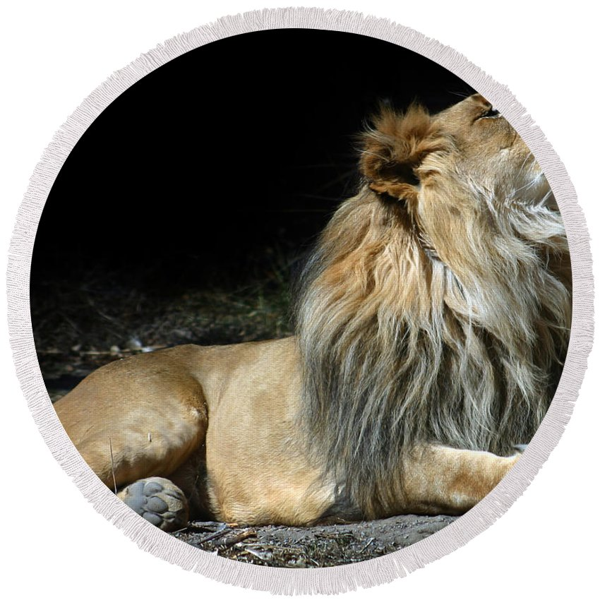 Lion Round Beach Towel featuring the photograph This Is My Best Side by Anthony Jones