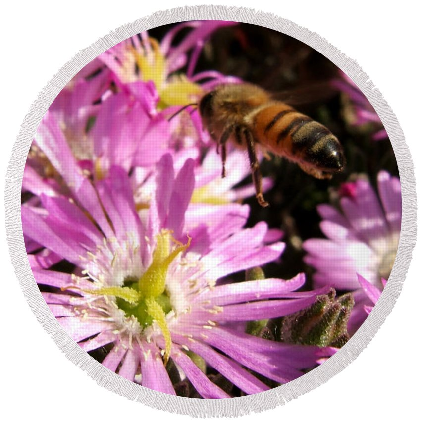 Bee Round Beach Towel featuring the photograph This Will Do by Chris Brannen