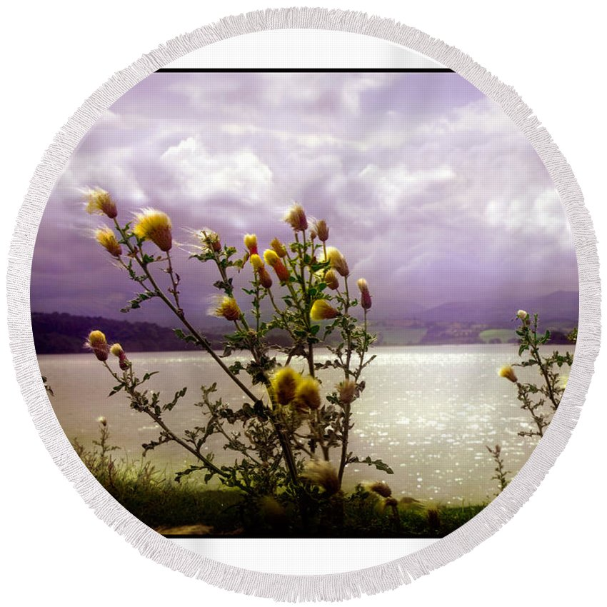 Thistle Round Beach Towel featuring the photograph Thistledown Time by Mal Bray